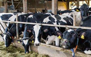 【PR】決して高くない、むしろ安すぎる日本の牛乳―(株)日本総合研究所 藻谷浩介氏に聞く「日本酪農の重要性」画像