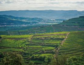 【ソアーヴェワイン保護協会】ソアーヴェがイタリアで初めてブドウ栽培に関する世界農業遺産に認定画像