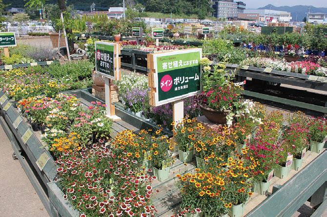 寄せ植えの組み合わせ提案/綿半スーパーセンター富士河口湖店(山梨県南都留郡)