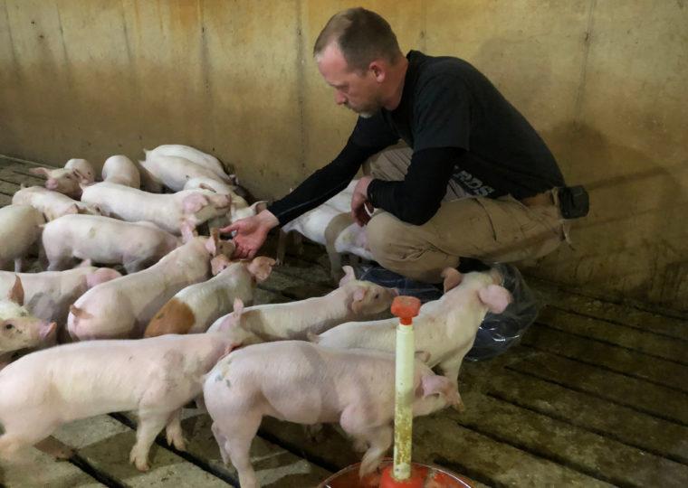 養豚農家の男性