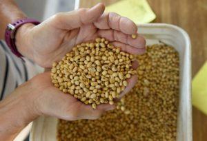米ノース・ダコタ州の大豆農家