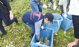 マルイ収穫祭