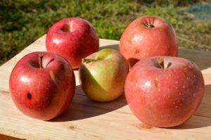 不揃いのリンゴ