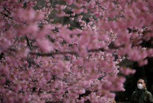 新宿御苑ので桜を見る人