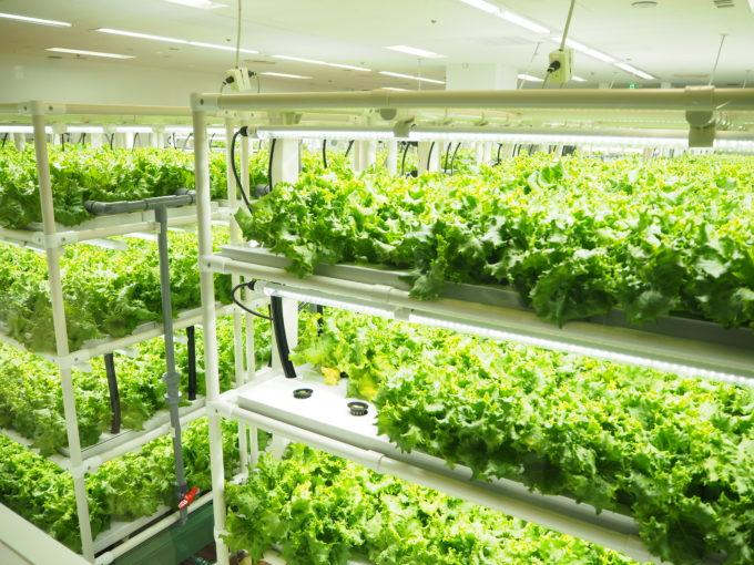 西友上福岡店に設置されたグリーンリーフの植物工場