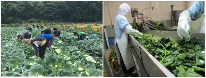 三井不動産が農業に本格参入