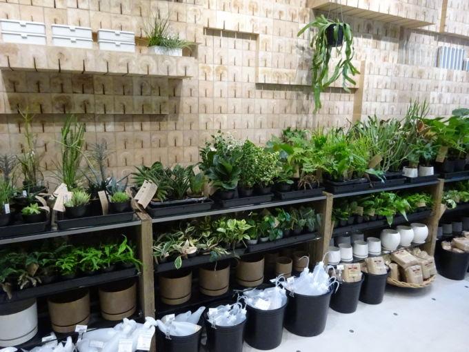 1階では食品のほか、約300種類の観葉植物を取り扱う「グリーン」売場を設けた