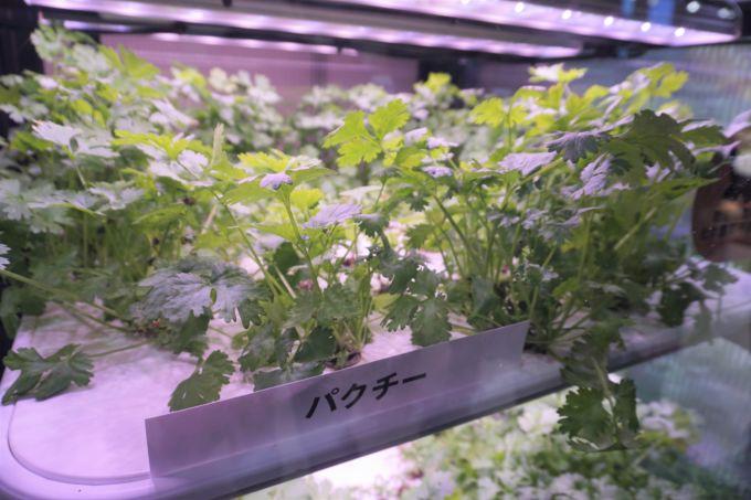 デジタル技術でユニット内の環境を高度に管理することによって化学農薬不使用で栽培。使用する肥料や水の量も削減できる