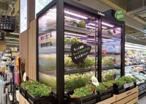 「サミットストア五反野店」(東京都足立区)に導入されたインファームの「屋内垂直農法」