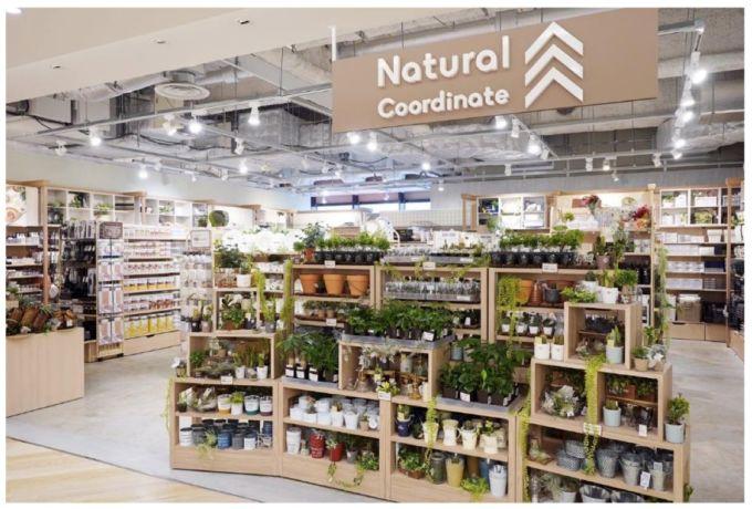 大創産業の新業態「ナチュラル コーディネート(NAtural Coordinate)」1号店(大阪梅田)