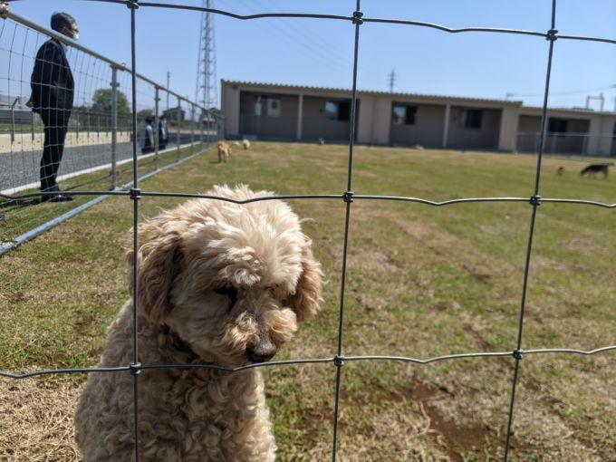 340坪の広大なドッグランで思い思いに過ごす犬たち